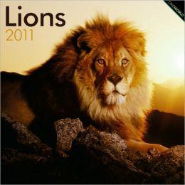 2011 Lions Square Wall Calendar