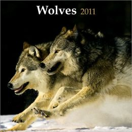 2011 Wolves PLATO Square Wall Calendar