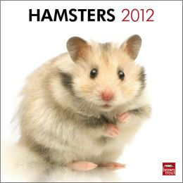 2012 Hamsters Square 12X12 Wall Calendar