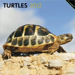 2012 Turtles Square 12X12 Wall Calendar