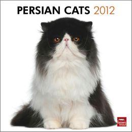 2012 Persian Cats Square 12X12 Wall Calendar