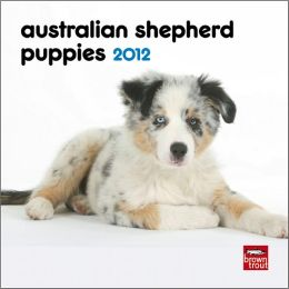 Australian Shepherd Puppies 2012 7X7 Mini Wall