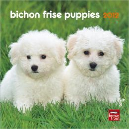 2012 Bichon Frise Puppies 7X7 Mini Wall Calendar