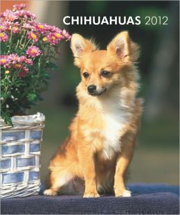 Chihuahuas 2012 Hardcover Weekly Engagement