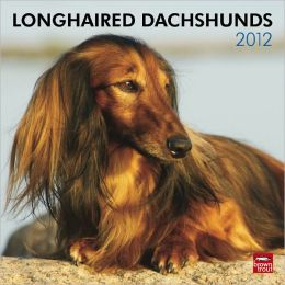 2012 Dachshunds, Longhaired Square 12X12 Wall Calendar