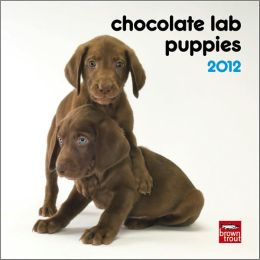 Chocolate Labrador Retriever Puppies 2012 7X7 Mini Wall