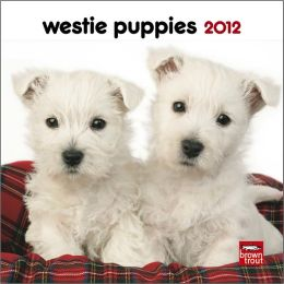 West Highland White Terrier Puppies 2012 7X7 Mini Wall