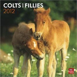 2012 Colts & Fillies Square 12X12 Wall Calendar