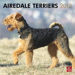 2012 Airedale Terriers Square 12X12 Wall Calendar