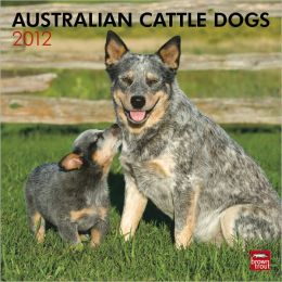 2012 Australian Cattle Dogs Square 12X12 Wall Calendar
