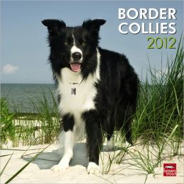 2012 Border Collies Square 12X12 Wall Calendar