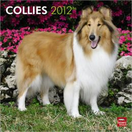 2012 Collies Square 12X12 Wall Calendar