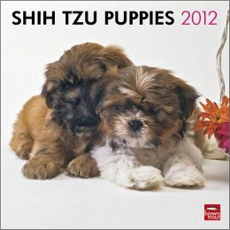 2012 Shih Tzu Puppies Square 12X12 Wall Calendar