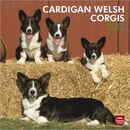 2012 Cardigan Welsh Corgis Square 12x12 Wall Calendar