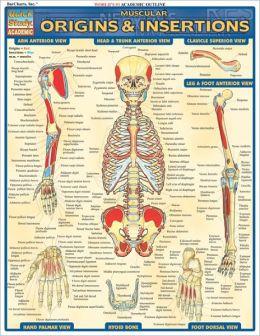 Muscular Origins & Insertions