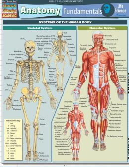 Anatomy Fundamentals: Life Sci. (New)