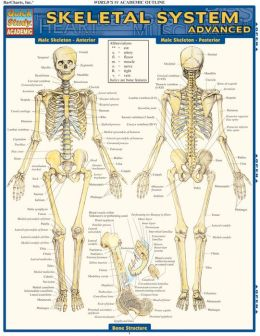 Skeletal System: Advanced