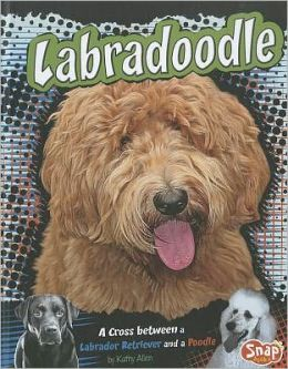 Labradoodle: A Cross Between a Labrador Retriever and a Poodle