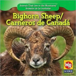 Bighorn Sheep/Carnero de Canadt