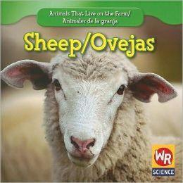Sheep/Las ovejas