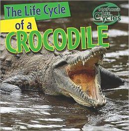 The Life Cycle of a Crocodile