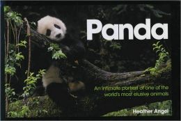 Panda: An intimate portrait of one of the world's most elusive creatures