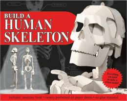 Build A Human Skeleton