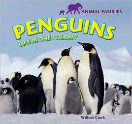 Penguins: Life in the Colony