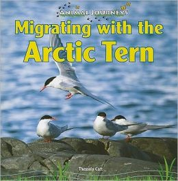 Migrating with the Arctic Tern
