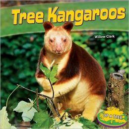 Tree Kangaroos