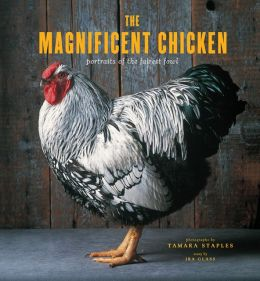 The Magnificent Chicken: Portraits of the Fairest Fowl