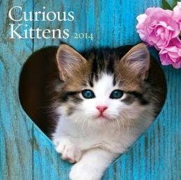 2014 Curious Kittens Wall Calendar