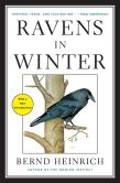 Book Cover Image. Title: Ravens in Winter, Author: Bernd Heinrich