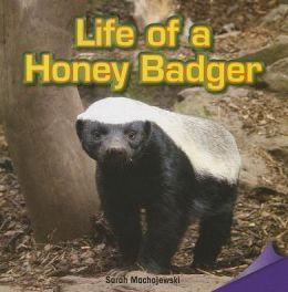 Life of a Honey Badger