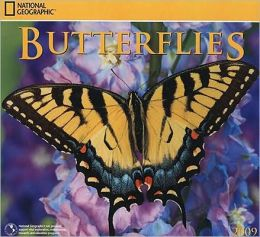 2009 National Geographic Butterflies Wall Calendar