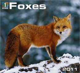 2011 Foxes Wall Calendar