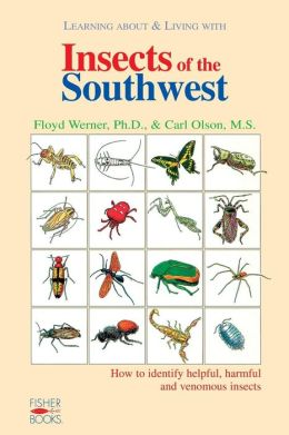 Insects of the Southwest
