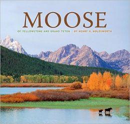 Moose of Yellowstone and Grand Teton