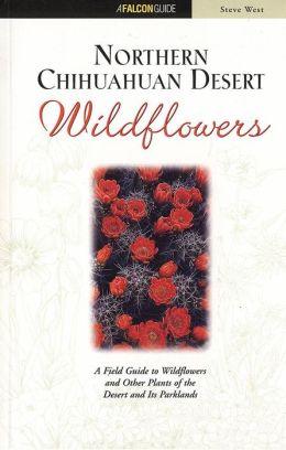 Northern Chihuahuan Desert Wildflowers Steve West