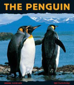 Penguin: A Funny Bird