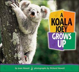 Koala Joey Grows Up