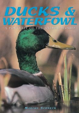 Ducks & Waterfowl: A Portrait Of The Animal World