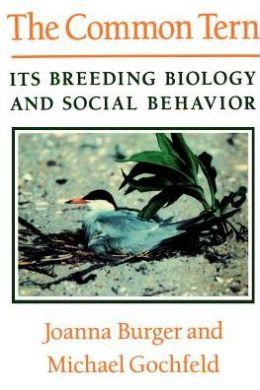 The Common Tern