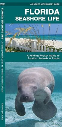 Florida Seashore Life: An Introduction to Familiar Plants and Animals