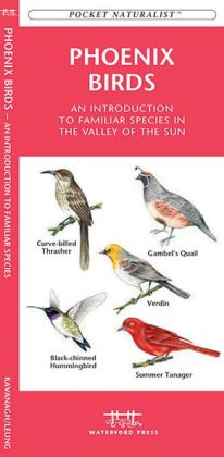 Pocket Naturalist: Phoenix Birds: An Introduction to Familiar Species in Central Arizona
