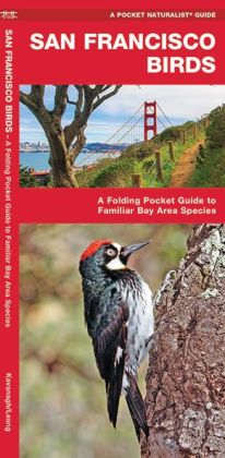 Pocket Naturalist: San Francisco Birds: An Introduction to Familiar Species Bay Area Species