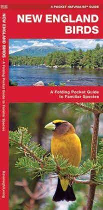 New England Birds