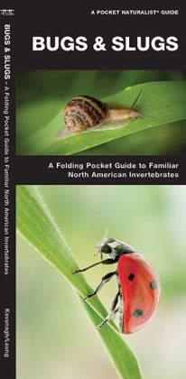 Bugs and Slugs: An Introduction to Familiar North American Invertebrates