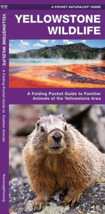 Yellowstone Wildlife: An Introduction to Familiar Species of Yellowstone Area, Wyoming