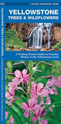 Yellowstone Trees and Wildflowers: An Introduction to Familiar Species of the Yellowstone Area